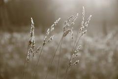 Grassprietjes in een weide royalty-vrije stock fotografie