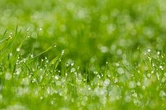 Grassprietjes met dauw stock foto's