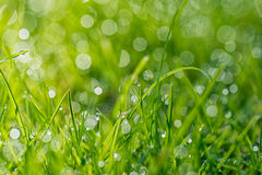Grassprietjes met het ochtendlicht Stock Foto