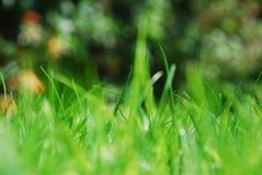 Grassprietjes op een zonnige dag Stock Foto