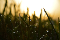 Grassroots sunset Royalty Free Stock Images