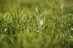 Grasss Stock Photography