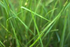 Grasssblad royalty-vrije stock foto's