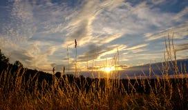 Grasstrohe in der Sonne Stockfoto