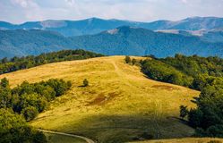 Grassy alpine meadow in early autumn. Weathered grassy alpine meadow near the beech forest on top of a hill view from above. lovely carpathian mountains scenery Stock Photos