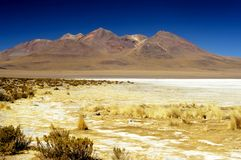 Grassy Andean Landscape Stock Photo
