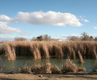 Grassy area with blue sky. Pond and clouds photographed in Nevada Stock Photos