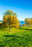 Grassy autumn colored park Stock Photography