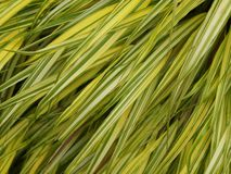Grassy background Royalty Free Stock Photos