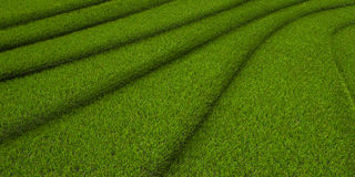 Grassy background 3d illustrated Stock Image