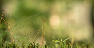 Grassy background Stock Photos