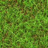 Grassy background Royalty Free Stock Image