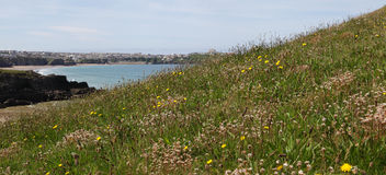 Grassy bank with ocean view Royalty Free Stock Image