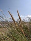 Grassy beach stock images