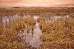 Grassy Bog Landscape at Dusk Stock Photography