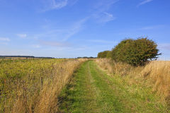 Grassy bridleway Royalty Free Stock Photo