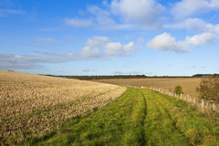 Grassy bridleway Royalty Free Stock Photography