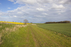 Grassy bridleway with wheat and canola crops Stock Image