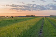 Grassy country road Royalty Free Stock Photography