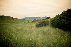 Grassy Dunes at Nehalem Bay Royalty Free Stock Photo