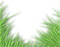 Grassy edge Stock Images