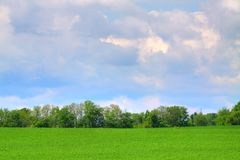 Grassy Field. A grassy field on a cloudy day Stock Photos