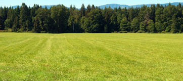 Grassy Field. A nice green field with a background of evergreen trees Royalty Free Stock Photography