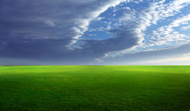 Grassy field Stock Photography