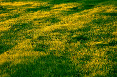 Grassy Field. A field of grass with patches of light and shadow stock images