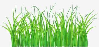 Grassy field. Vector illustration of Straight forward green grassy field Royalty Free Stock Photo