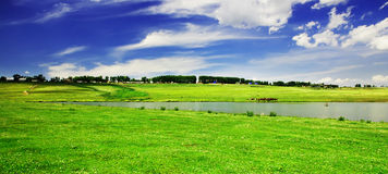 Grassy field Royalty Free Stock Images
