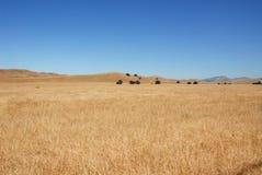 Grassy field. Livermore, California Stock Photos