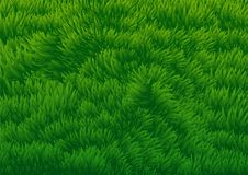 Grassy Field background-Vector Illustration Stock Photography
