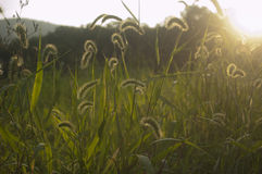 Grassy Field at the Base of the Mountains at Sunset Royalty Free Stock Images