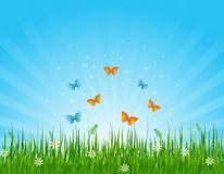 Grassy field and butterflies Stock Photos