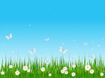 Grassy field and butterflies Stock Photo