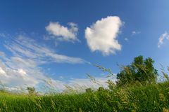 Grassy field and clouds on windy summer day stock image