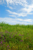 Grassy field with cloudy sky and green grass Stock Photos