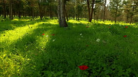 Grassy field with flowers and trees stock video footage