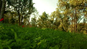 Grassy field with flowers and trees stock video