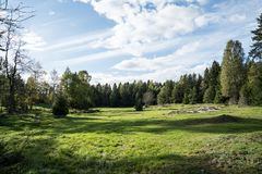 Grassy field in a forest Stock Images
