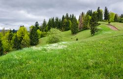 Grassy field on a forested hill Royalty Free Stock Photo