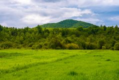 Grassy field near the forest in mountains. Lovely rural scenery on overcast day Royalty Free Stock Image