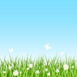 Grassy field. Seamless illustration. Stock Photography