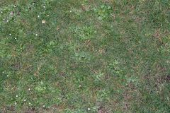 Grassy Meadow Texture. This is a grassy field with some small flowers. Great for making textures Stock Images