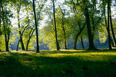 Grassy field among stees Stock Photography