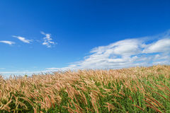 Grassy field. On a sunny summer day Stock Image