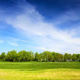 Grassy field and trees with blue sky on background Royalty Free Stock Photos