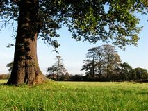 Grassy Field With Trees Stock Photos