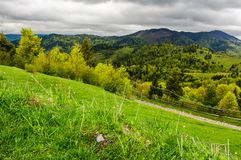 Grassy fields on forested hills. Beautiful springtime landscape in mountains on an overcast day royalty free stock images